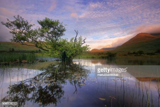 Tree reflection in a lake, Connemara, Ireland