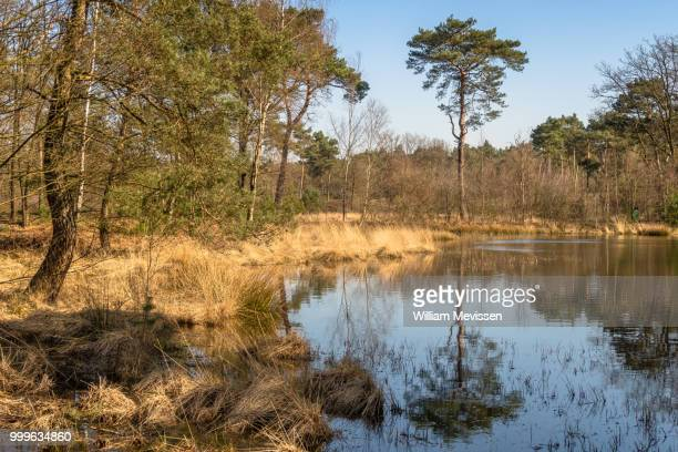 tree reflection - william mevissen stock pictures, royalty-free photos & images