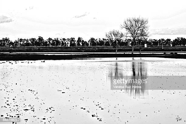 tree reflections - black and white instant print stock pictures, royalty-free photos & images
