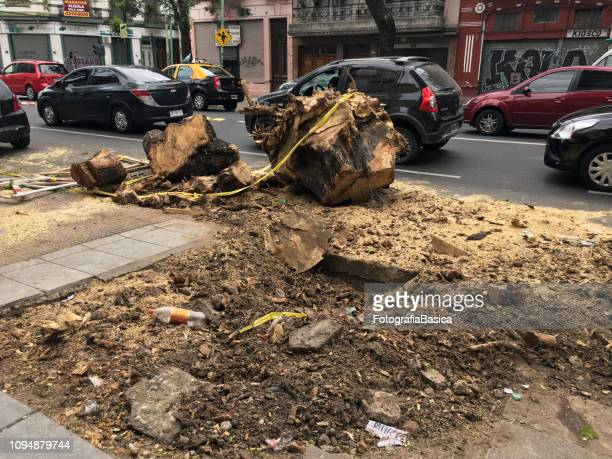 Tree removed from the street