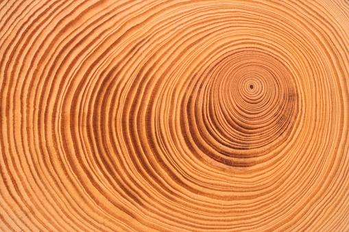 Tree Ring - gettyimageskorea