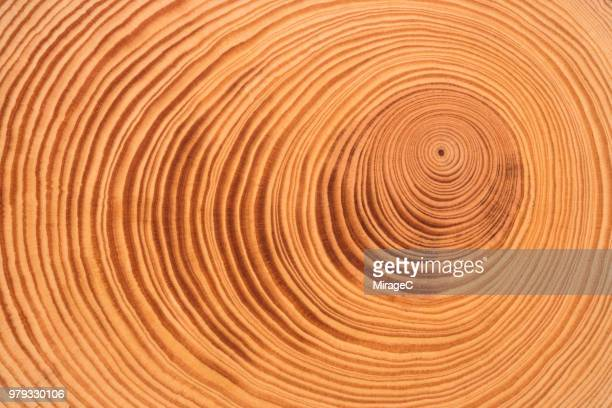 tree ring - growth stock pictures, royalty-free photos & images