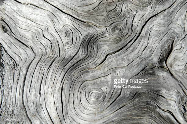 tree rings and tree trunk on the beach of cap meares, oregon state, usa - nature stock pictures, royalty-free photos & images