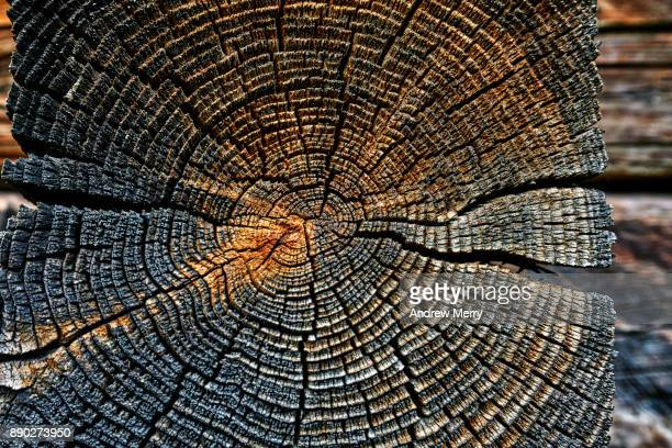 tree rings in timber block and wood-grain detail. historic wooden barn, chalet or hut in the mountains above zermatt, switzerland, swiss alps - zermatt stock pictures, royalty-free photos & images