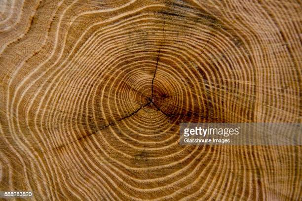 tree rings of a stump - tree trunk stock pictures, royalty-free photos & images