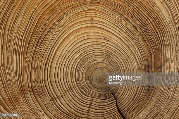 tree rings - cross section stock pictures, royalty-free photos & images