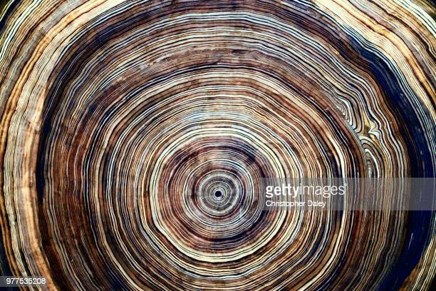 tree rings - close up stockfoto's en -beelden