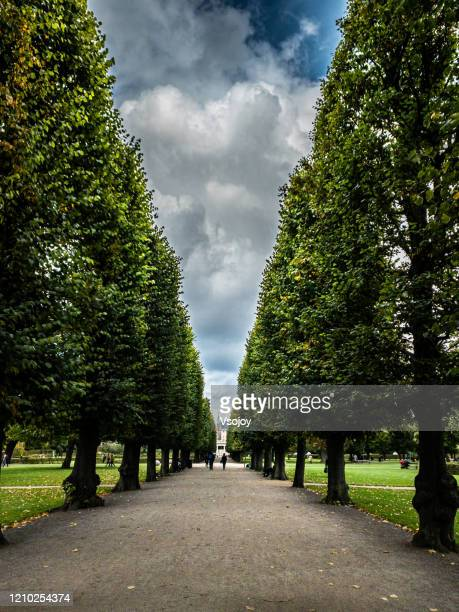 tree road at the king's garden, copenhagen, denmark - vsojoy stock pictures, royalty-free photos & images