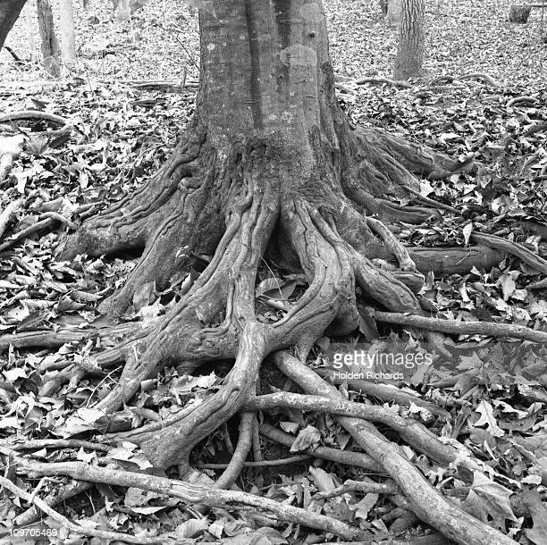 Tree roots and leaves