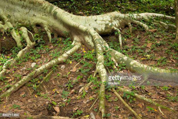 Tree roots exposed