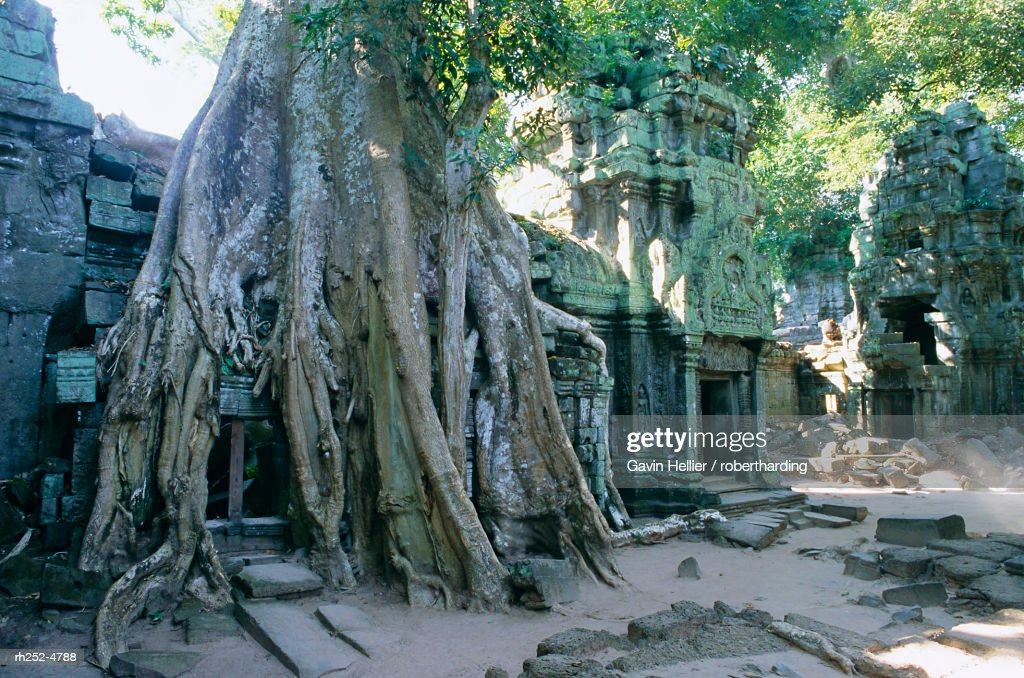 """""""Tree roots growing over ruins at archaeological site, Ta Prohm temple, Angkor, UNESCO World Heritage Site, Cambodia, Indochina, Southeast Asia, Asia"""" : Stockfoto"""