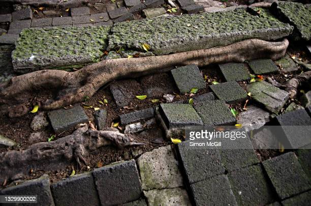 tree roots lift concrete and paving stones on a curbside sidewalk - damaged stock pictures, royalty-free photos & images