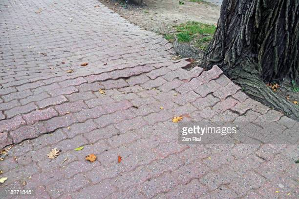 tree roots push up and damaged brick walkway causing tripping hazards - bad condition stock pictures, royalty-free photos & images