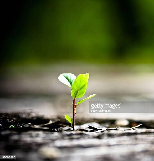 tree sapling growing out of a railroad bridge - sapling stock photos and pictures
