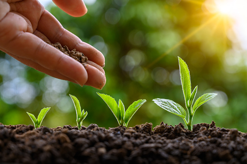 tree sapling hand planting sprout in soil with sunset close up male hand planting young tree over green background - gettyimageskorea
