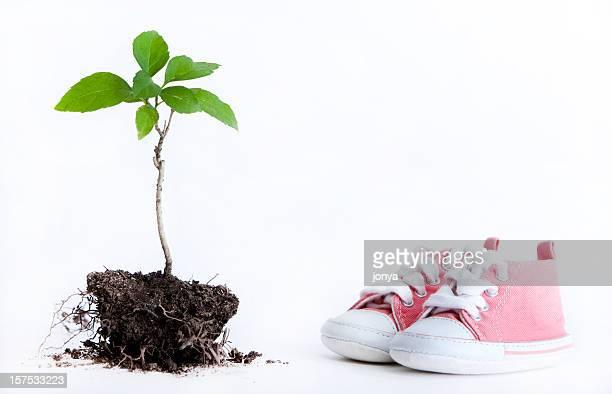 Árbol de esperanza y zapatos de bebé