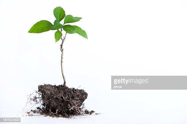 tree seedling - small stock pictures, royalty-free photos & images