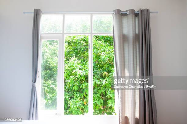tree seen through window - photographed through window stock pictures, royalty-free photos & images