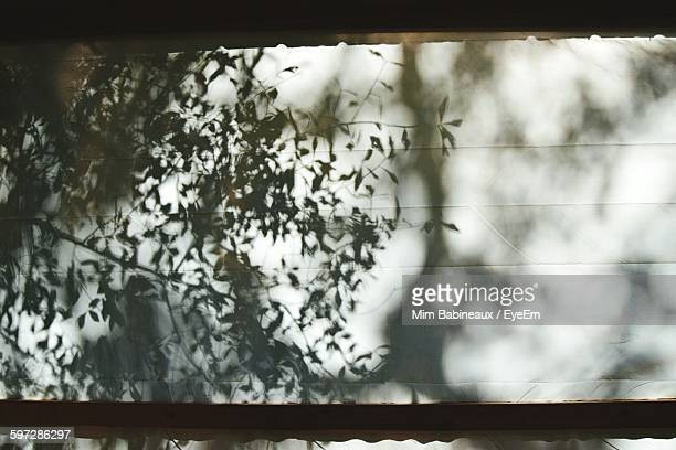 Tree Shadow On Wall Of House