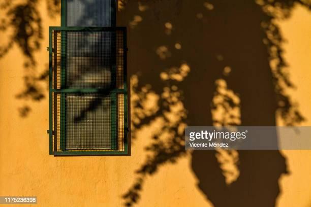 tree shadow - vicente méndez fotografías e imágenes de stock