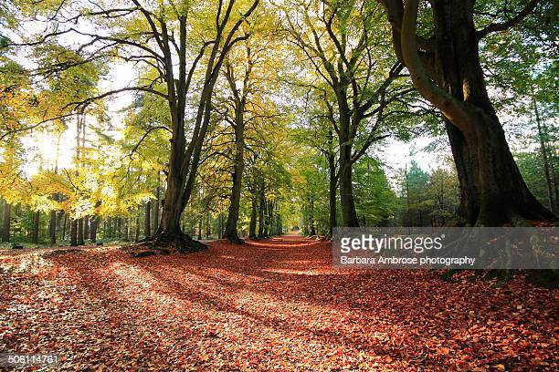 tree shadows - northamptonshire stock pictures, royalty-free photos & images