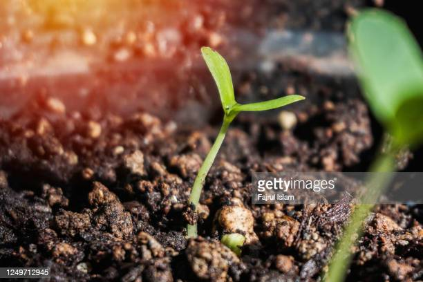 tree shoots that grow in the morning with sunlight - condition stock pictures, royalty-free photos & images