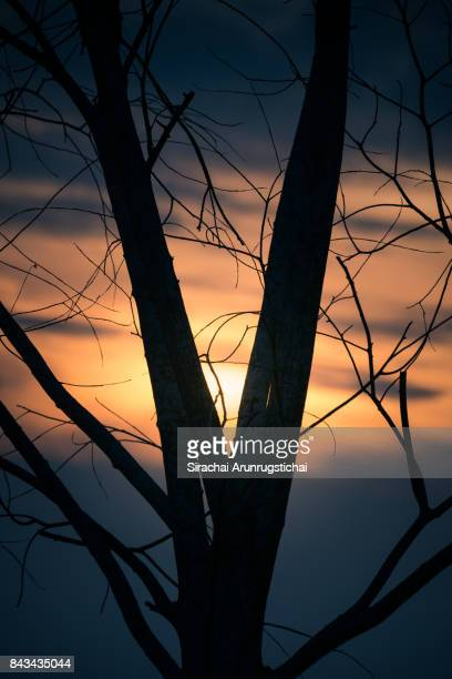 Tree silhouette against colourful sunset