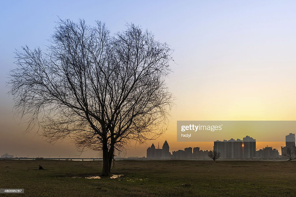 tree silhouette at sunset : Stock Photo
