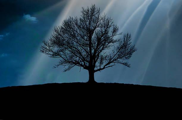 Tree silhouette, Upstate New York.