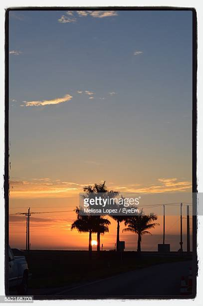 tree silhouetted at sunset - lopez stock pictures, royalty-free photos & images