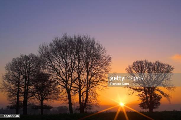 Tree silhouettes at sunrise with sunbeams, Niederrhein, North Rhine-Westphalia, Germany