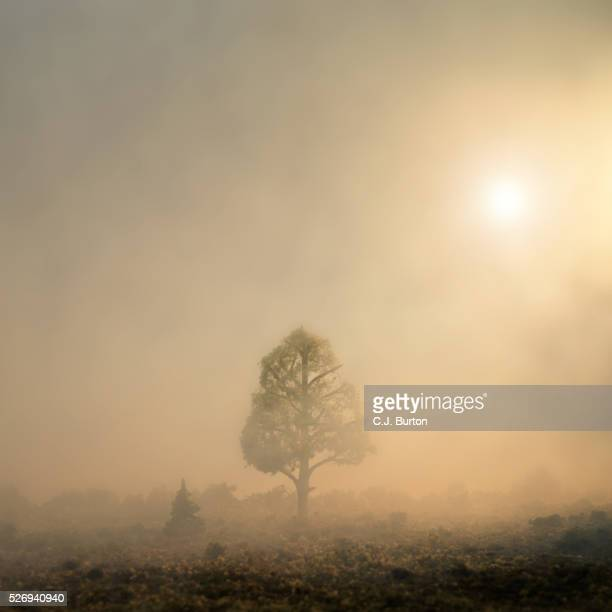 A tree sits alone in a foggy wilderness and is back lit by the sun in the mist
