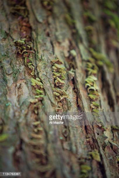 tree skin texture - newfound gap stock photos and pictures