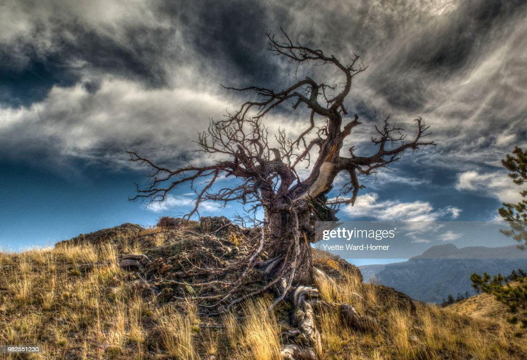 Tree & Sky : Photo