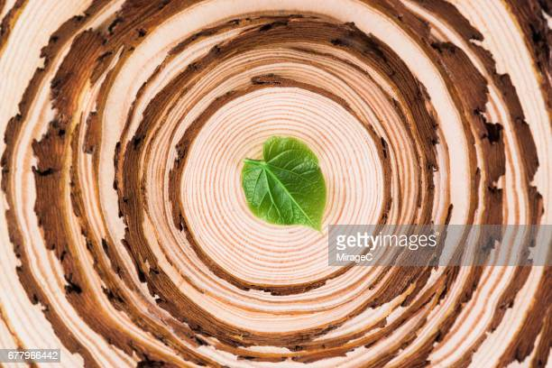 Tree Slices Rings with A Leaf on the Top