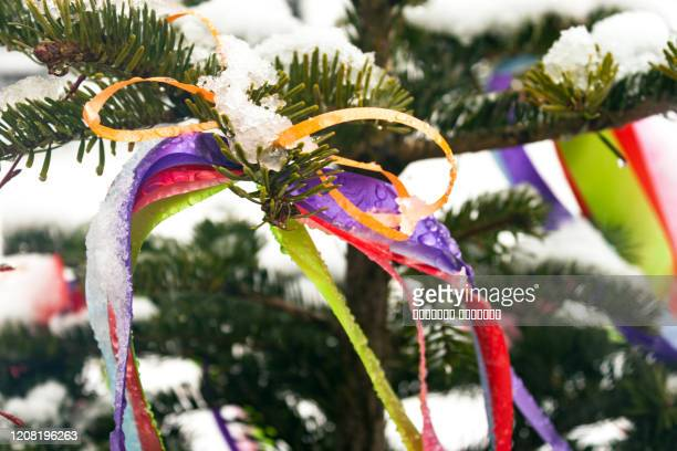 tree spruce snow decorated colorful ribbons christmas new year shrovetide maslenitsa holiday concept - orthodox christmas stock pictures, royalty-free photos & images