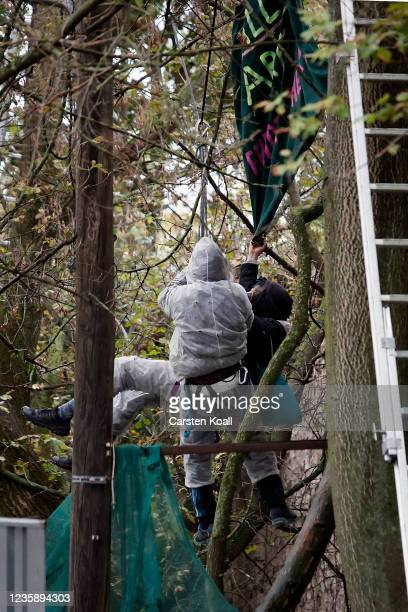 Tree squatters are roped down on ropes by police officers after they have tied themselves to the tree at the left alternative site trailer Camp Kopi...