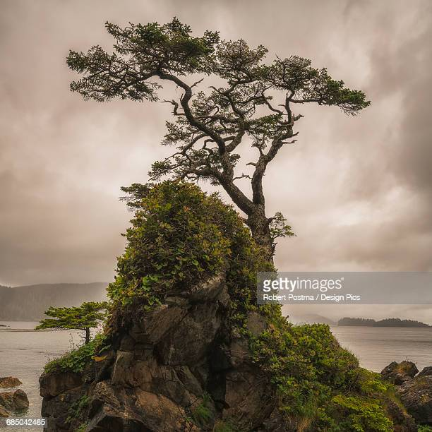 A tree stands alone on a rocky hill top along the shores of Haida Gwaii
