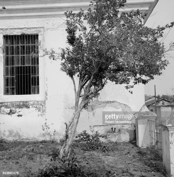 A tree stands in a compound of a partially abandoned house in Cinquera El Salvador May 10 1983 At the time El Salvador was engaged in what became a...