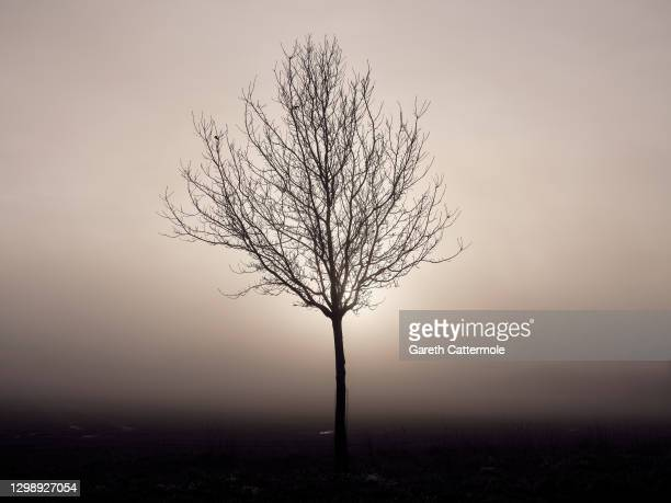 Tree stands in a field near Stansted Airport on January 27, 2021 in Stansted, United Kingdom.