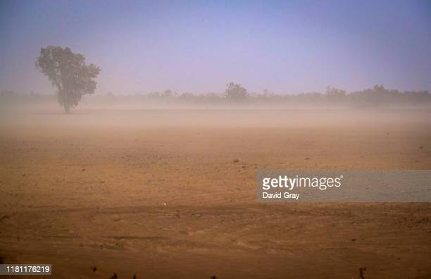 Tree stands in a paddock as a dust storm passes through on a drought-affected property located on the Moree Plains and on the outskirts of the...