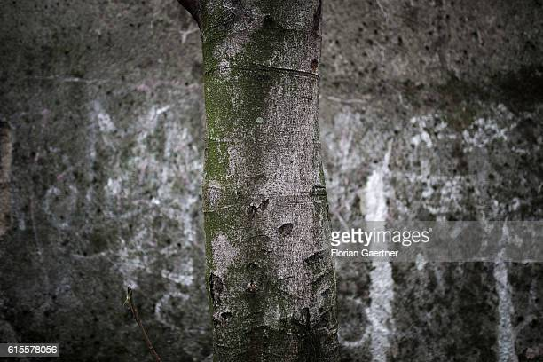 A tree stands in front of a wall that looks similar to the tree on October 18 2016 in Berlin Germany