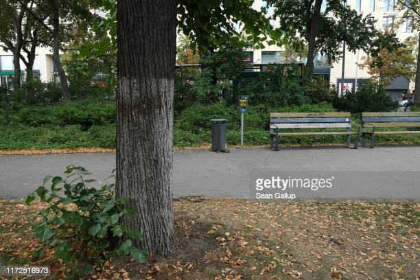 Tree stands near the spot where on August 23 a Chechen man named Zelimkhan Khangoshvili was shot dead by an assassin on September 05, 2019 in Berlin,...