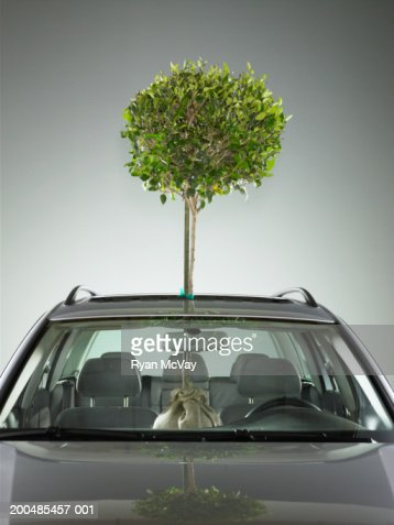 Tree Sticking Out Of Sun Roof In Car Stock Photo Getty
