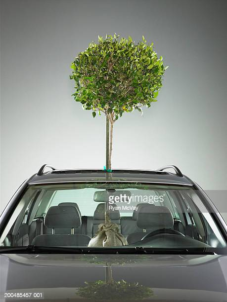Tree sticking out of sun roof in car