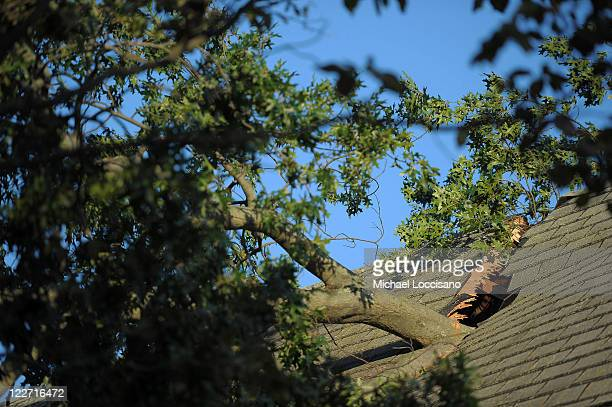 A tree sticks out of a house it crashed through due to winds caused by Hurricane Irene on August 28 2011 in Manasquan New Jersey While Hurricane...