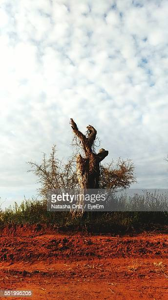 Tree Stump Against Cloudy Sky