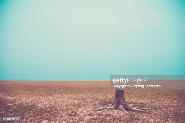 A tree stump among the empty grass field.
