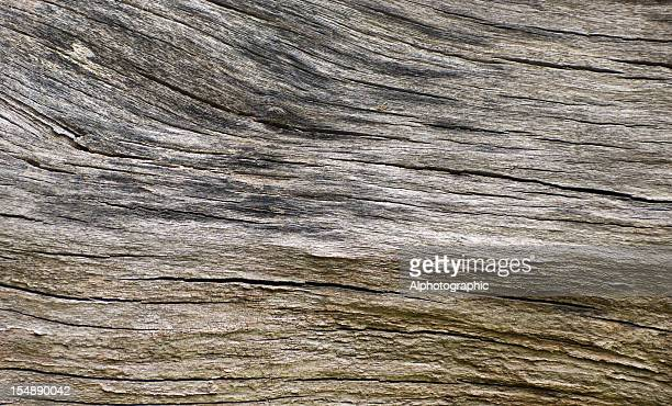 Tree stump bark background