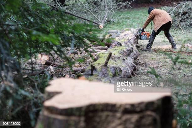 Tree Stump. Cutting Tree.